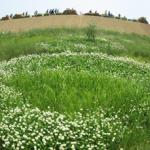 千年希望の丘1
